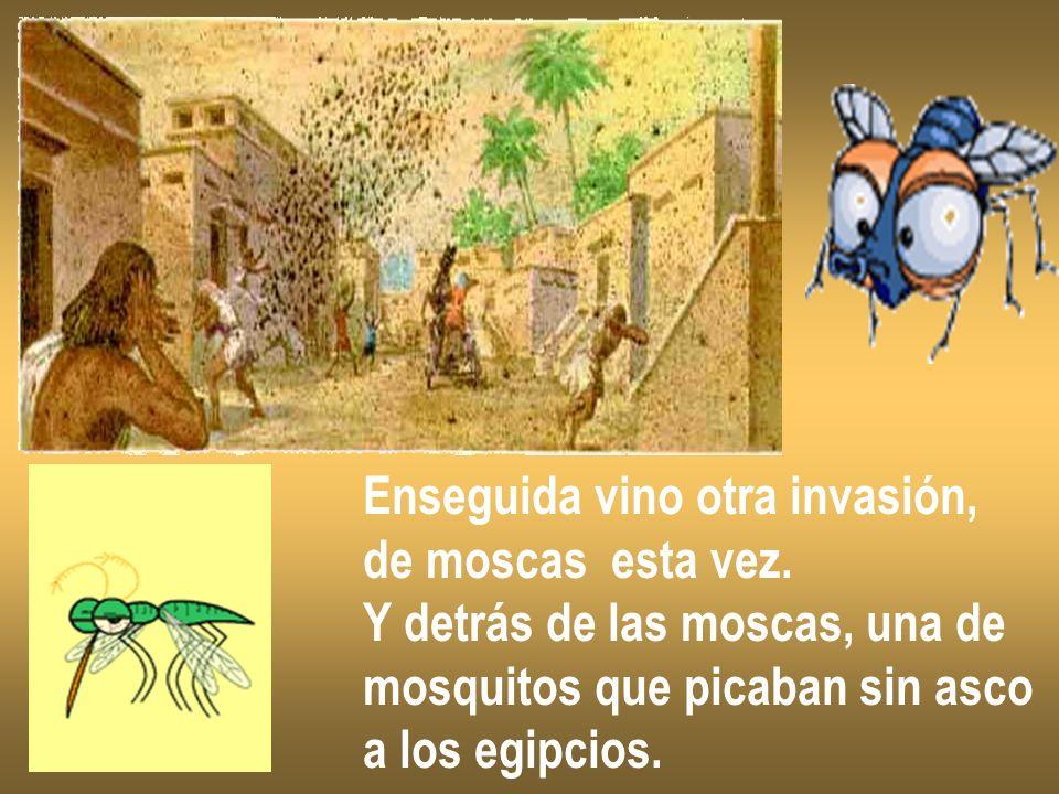 Enseguida vino otra invasión, de moscas esta vez. Y detrás de las moscas, una de mosquitos que picaban sin asco a los egipcios.