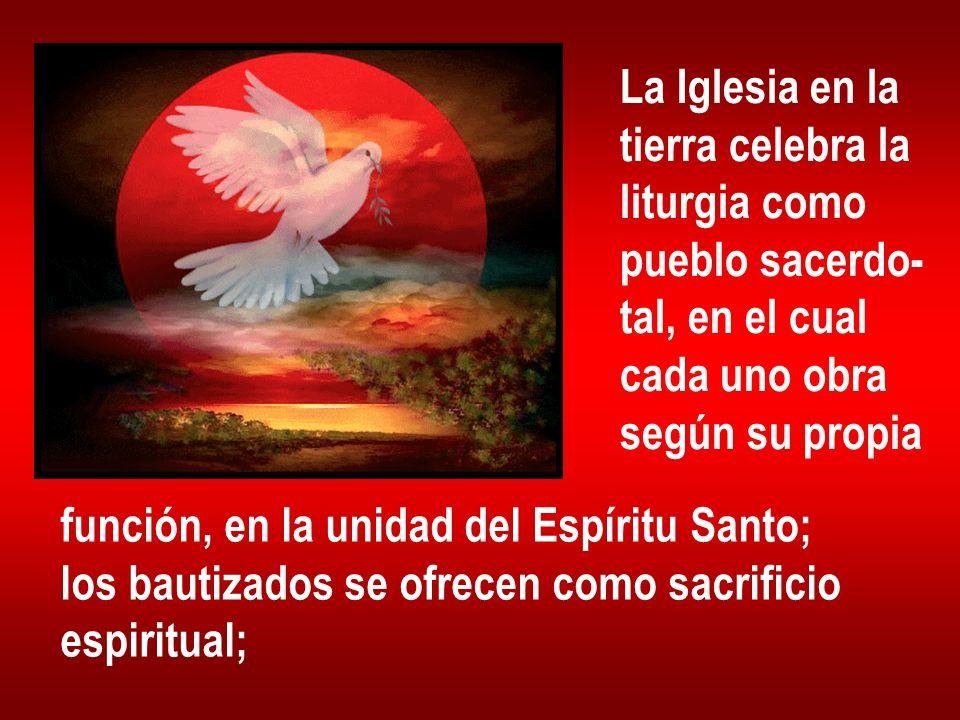 La Iglesia en la tierra celebra la liturgia como pueblo sacerdo- tal, en el cual cada uno obra según su propia función, en la unidad del Espíritu Sant