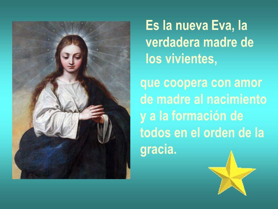 Es la nueva Eva, la verdadera madre de los vivientes, que coopera con amor de madre al nacimiento y a la formación de todos en el orden de la gracia.