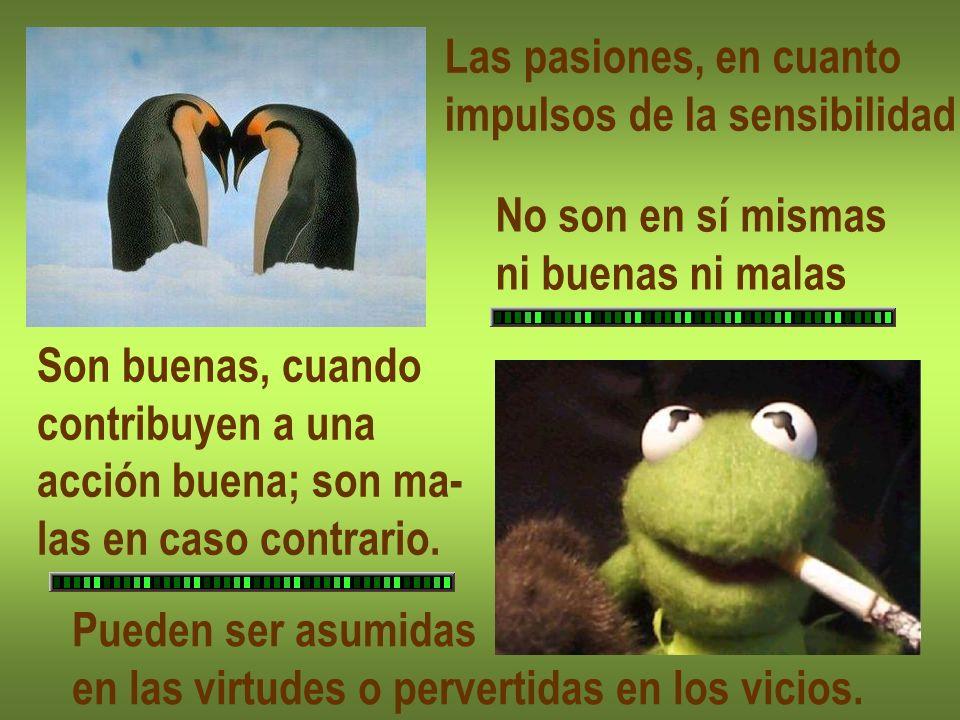 Las pasiones, en cuanto impulsos de la sensibilidad No son en sí mismas ni buenas ni malas Son buenas, cuando contribuyen a una acción buena; son ma-