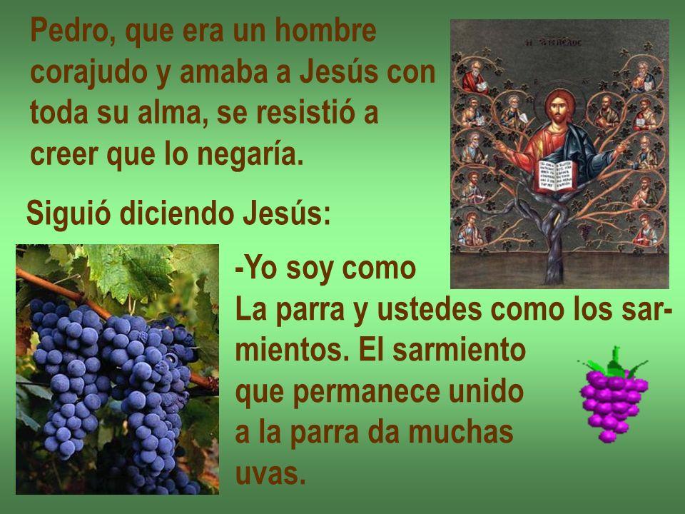 Pedro, que era un hombre corajudo y amaba a Jesús con toda su alma, se resistió a creer que lo negaría. Siguió diciendo Jesús: -Yo soy como La parra y