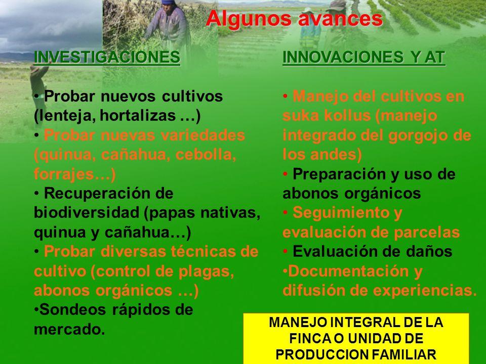Algunos avances INVESTIGACIONES Probar nuevos cultivos (lenteja, hortalizas …) Probar nuevas variedades (quinua, cañahua, cebolla, forrajes…) Recupera