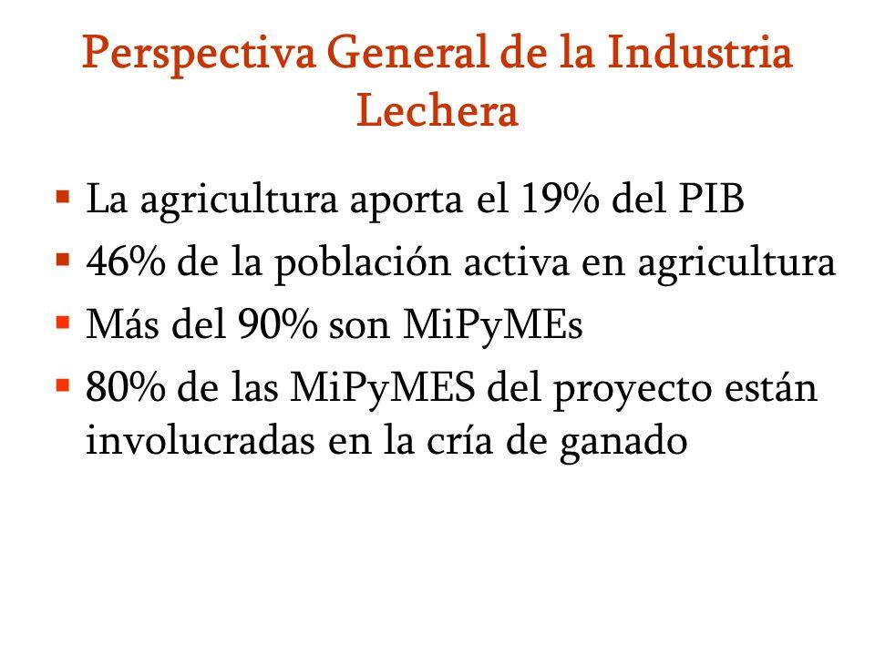 Perspectiva General de la Industria Lechera La agricultura aporta el 19% del PIB 46% de la población activa en agricultura Más del 90% son MiPyMEs 80%