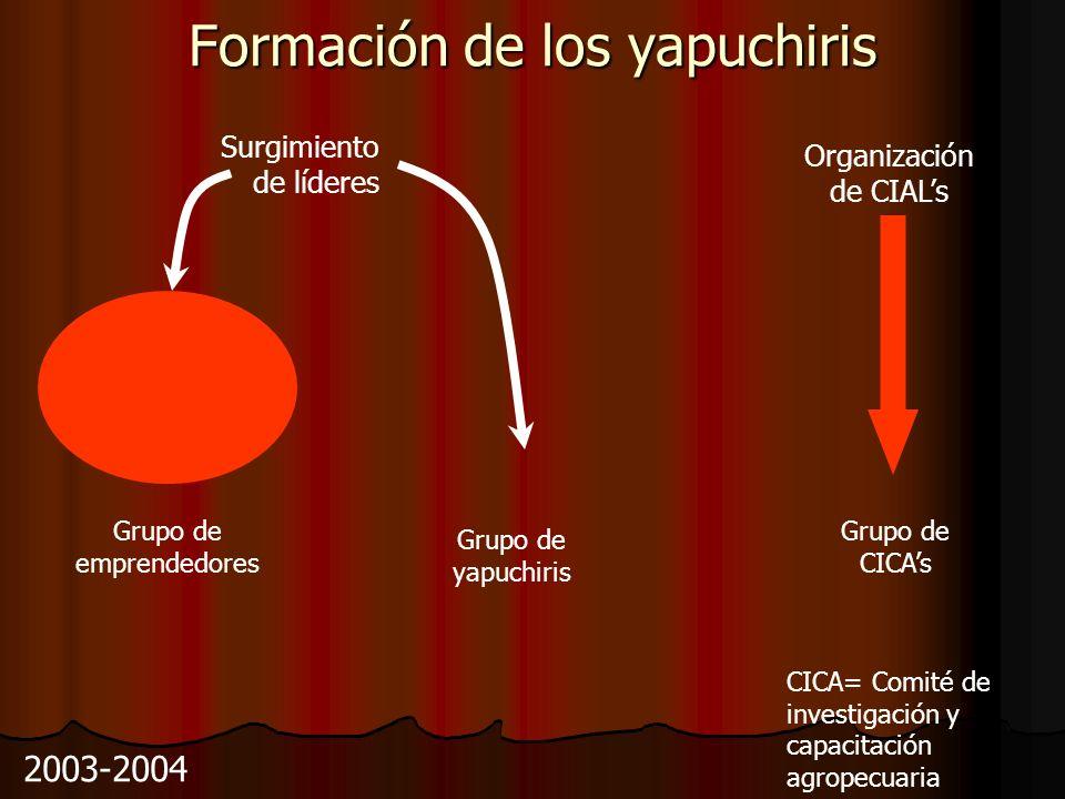 Formación de los yapuchiris Surgimiento de líderes Organización de CIALs 2003-2004 Grupo de CICAs Grupo de emprendedores Grupo de yapuchiris CICA= Comité de investigación y capacitación agropecuaria