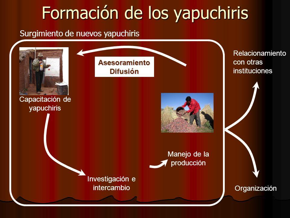 Investigación e intercambio Capacitación de yapuchiris Manejo de la producción Asesoramiento Difusión Relacionamiento con otras instituciones Organización Formación de los yapuchiris Surgimiento de nuevos yapuchiris