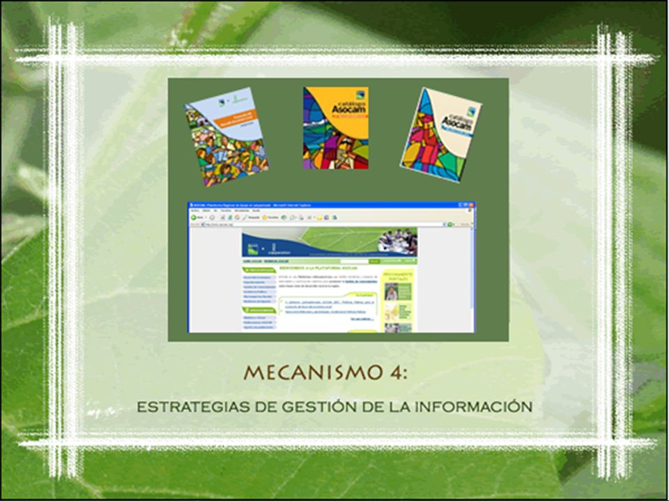 Mecanismo 4 Estrategias de Gestión de la Información