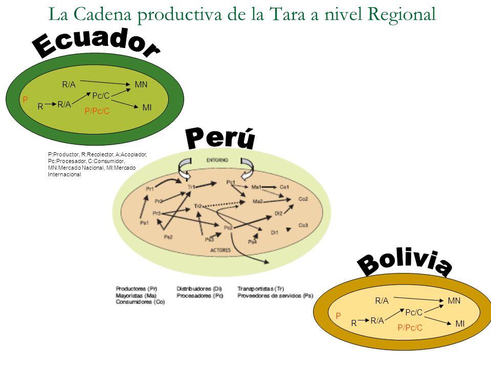 La Cadena productiva de la Tara a nivel Regional R R/A Pc/C MN MI R/A P P/Pc/C P:Productor, R:Recolector, A:Acopiador, Pc:Procesador, C:Consumidor, MN