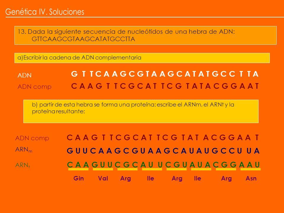 13. Dada la siguiente secuencia de nucleótidos de una hebra de ADN: GTTCAAGCGTAAGCATATGCCTTA a)Escribir la cadena de ADN complementaria b) partir de e