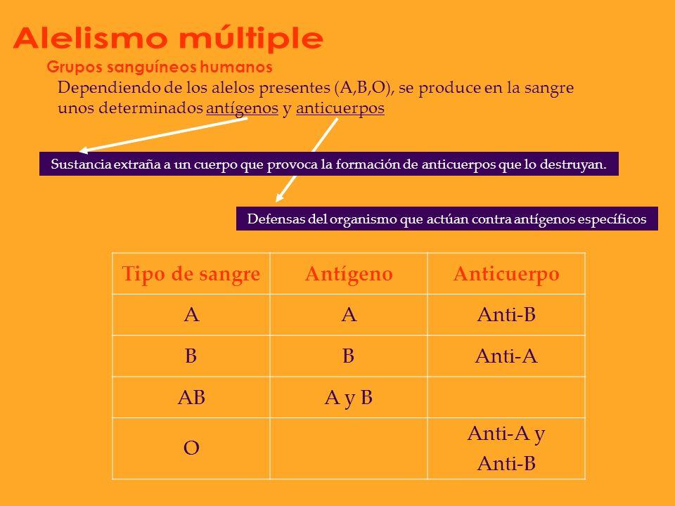 Existen varios alelos para un carácter Grupos sanguíneos humanos Alelos Codominantes Recesivo O A B ABO OO BOBO B AA A AB O BB B AOAO A