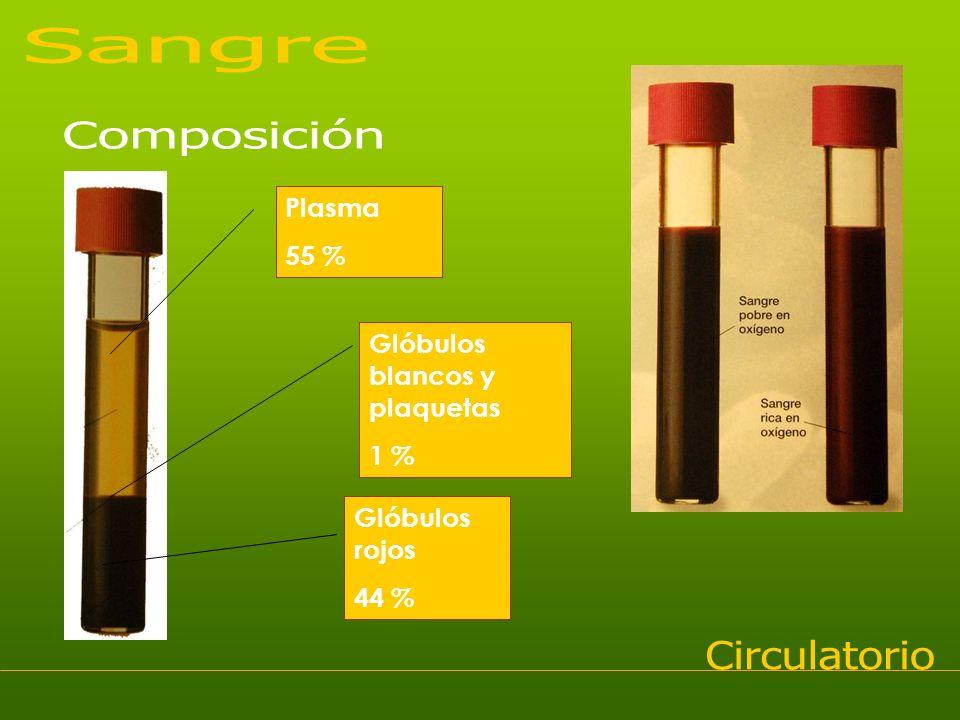 Plasma 55 % Glóbulos blancos y plaquetas 1 % Glóbulos rojos 44 %