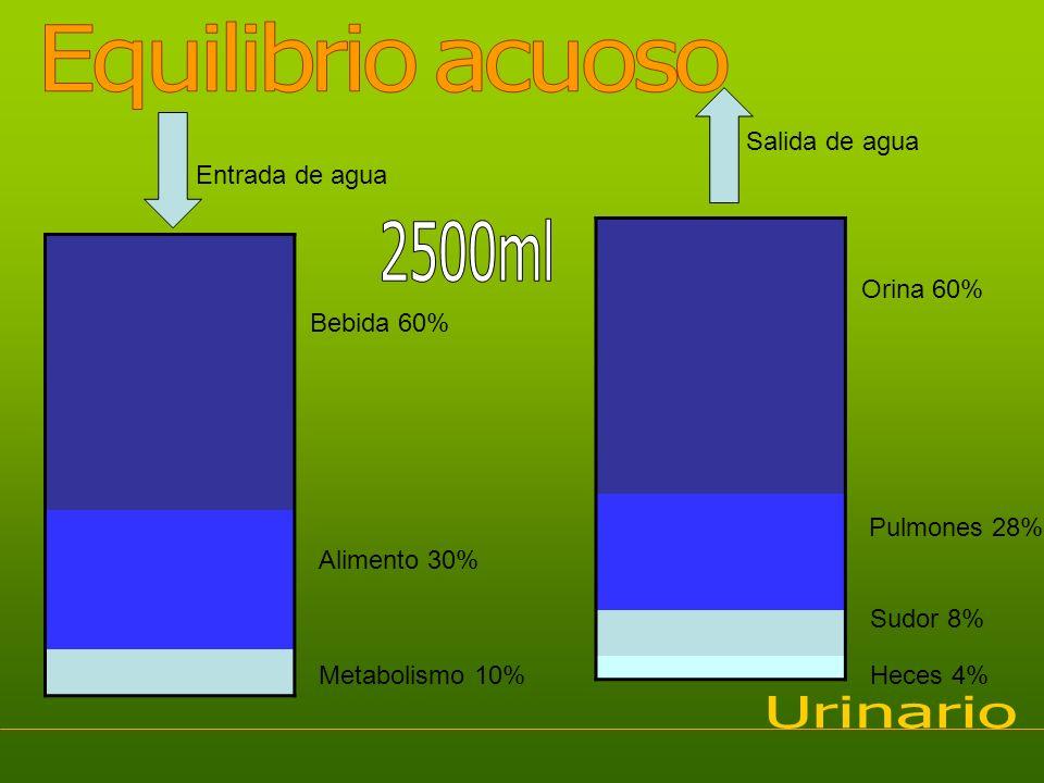 Entrada de agua Bebida 60% Alimento 30% Metabolismo 10% Salida de agua Orina 60% Pulmones 28% Sudor 8% Heces 4%