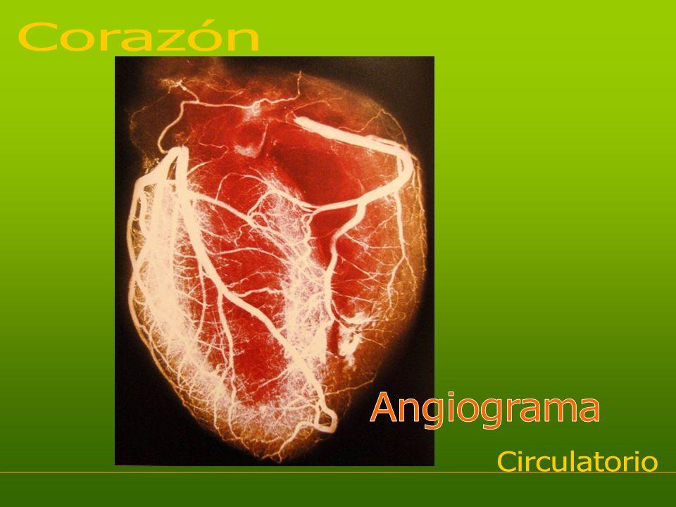 Flujo sanguíneo Glucosa Agua Iones