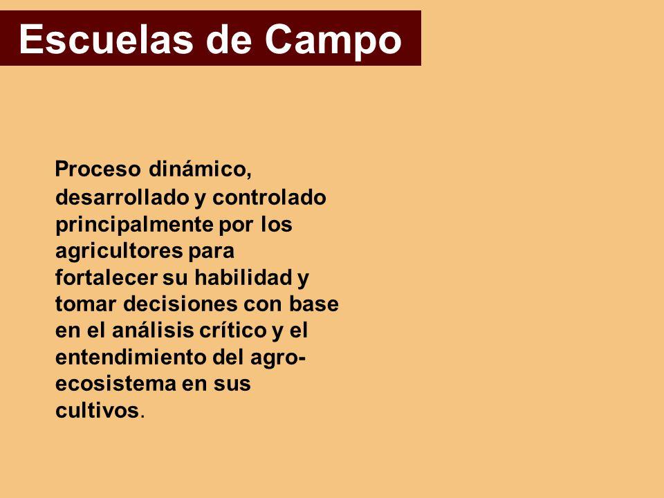Escuelas de Campo Proceso dinámico, desarrollado y controlado principalmente por los agricultores para fortalecer su habilidad y tomar decisiones con base en el análisis crítico y el entendimiento del agro- ecosistema en sus cultivos.