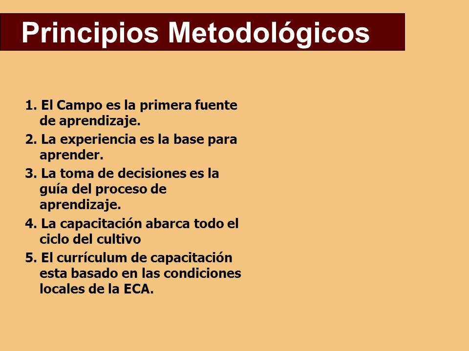 Principios Metodológicos 1.El Campo es la primera fuente de aprendizaje.