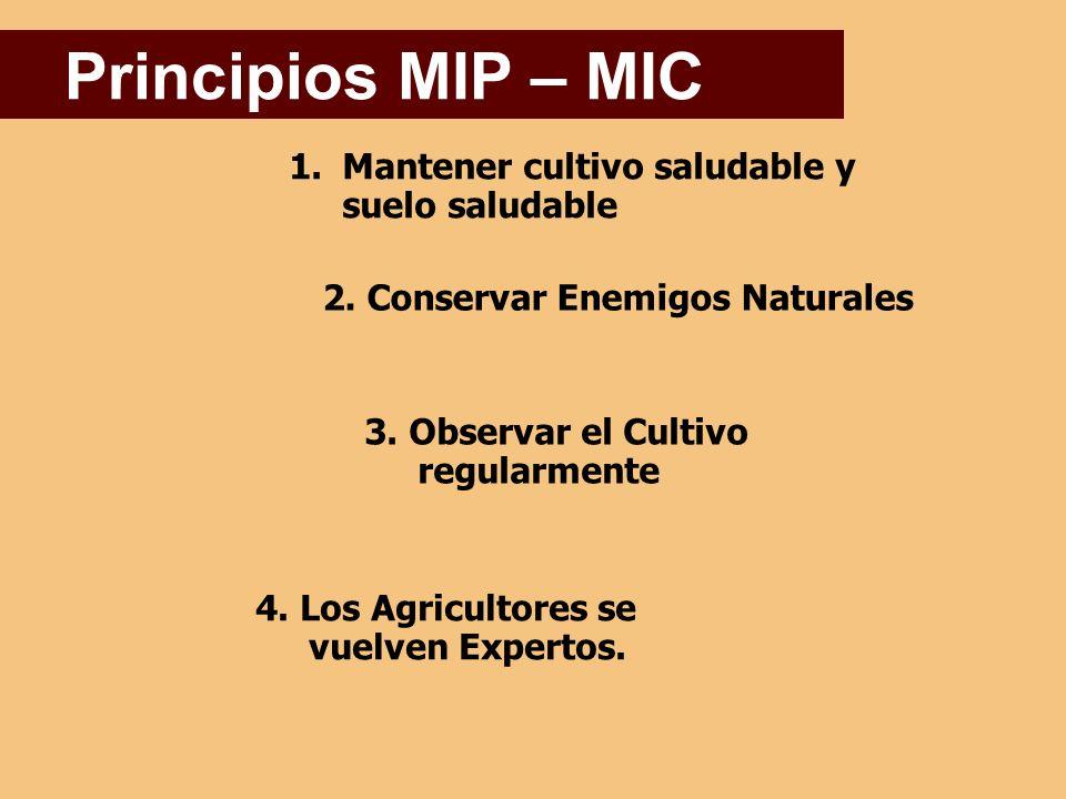 1.Mantener cultivo saludable y suelo saludable Principios MIP – MIC 2.
