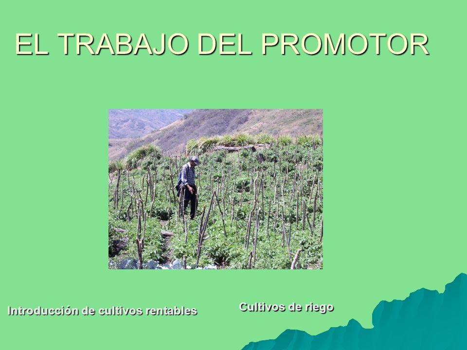 Cultivos de riego Introducción de cultivos rentables
