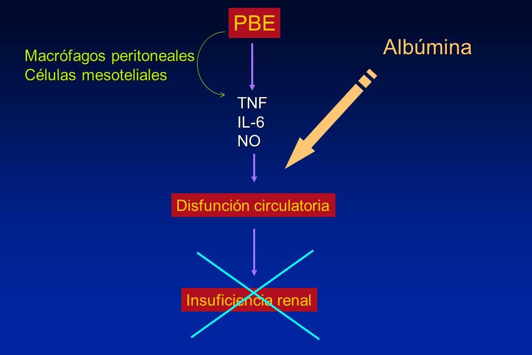 PBE Disfunción circulatoria Insuficiencia renal TNF IL-6 NO Macrófagos peritoneales Células mesoteliales Albúmina