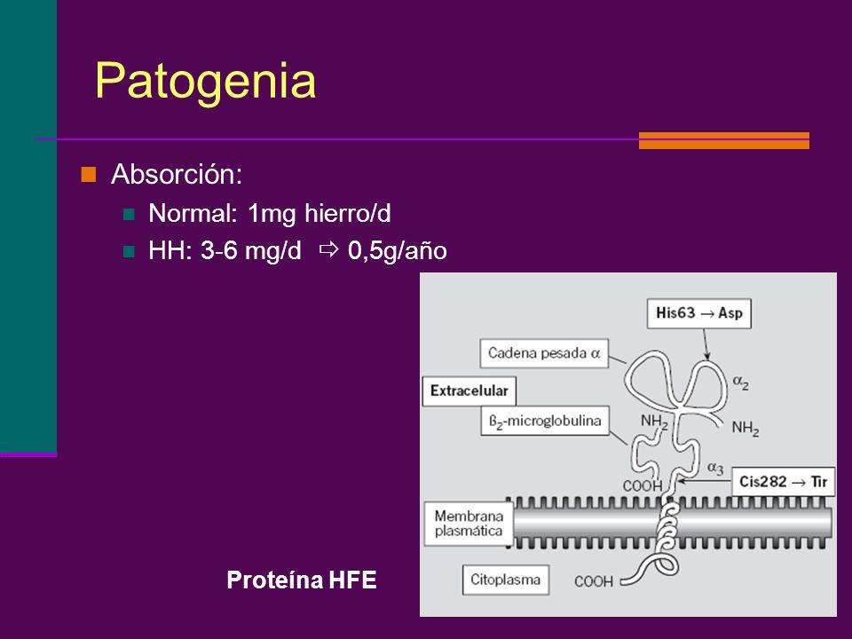 Patogenia Absorción: Normal: 1mg hierro/d HH: 3-6 mg/d 0,5g/año Proteína HFE