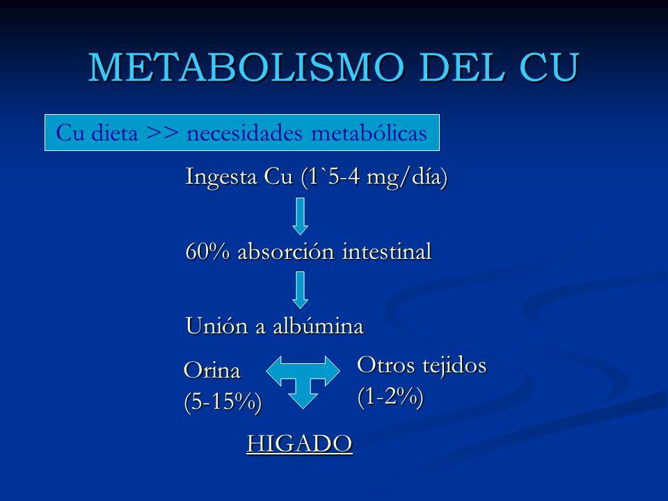 METABOLISMO DEL CU Ingesta Cu (1`5-4 mg/día) 60% absorción intestinal Unión a albúmina Orina (5-15%) Otros tejidos (1-2%) HIGADO Cu dieta >> necesidad