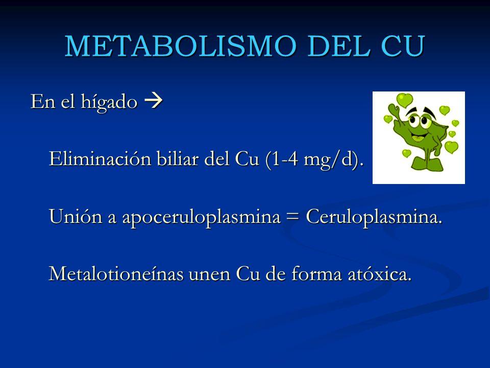 METABOLISMO DEL CU En el hígado En el hígado Eliminación biliar del Cu (1-4 mg/d). Unión a apoceruloplasmina = Ceruloplasmina. Metalotioneínas unen Cu