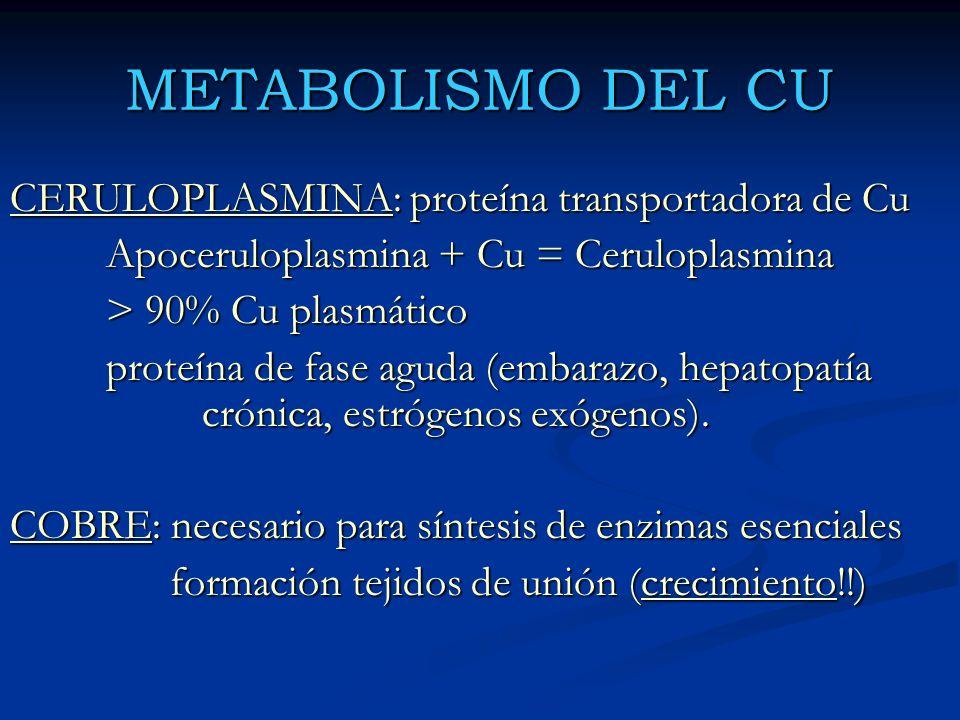 METABOLISMO DEL CU CERULOPLASMINA: proteína transportadora de Cu Apoceruloplasmina + Cu = Ceruloplasmina > 90% Cu plasmático proteína de fase aguda (e