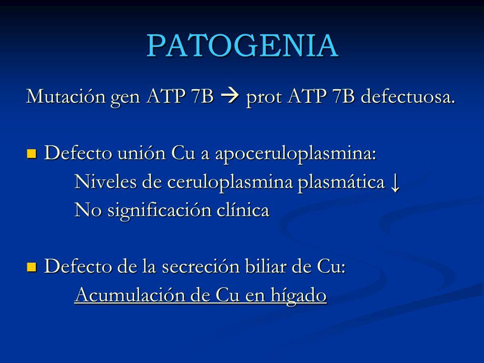 PATOGENIA Mutación gen ATP 7B prot ATP 7B defectuosa. Defecto unión Cu a apoceruloplasmina: Defecto unión Cu a apoceruloplasmina: Niveles de cerulopla