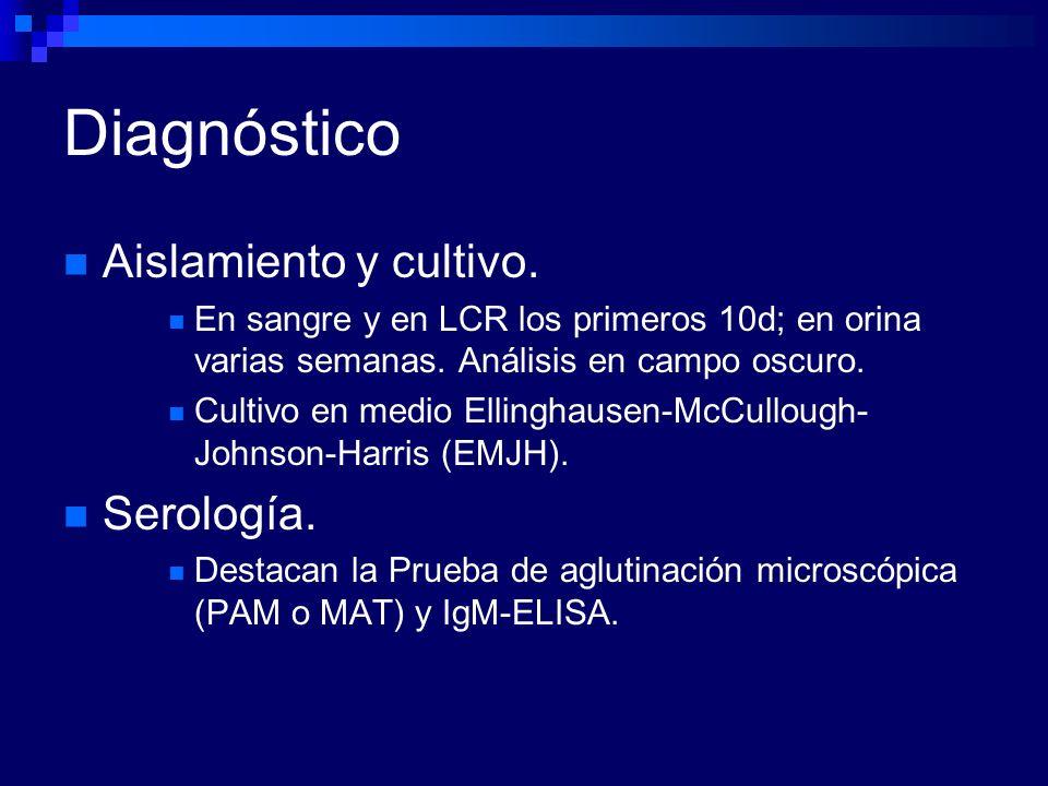 Diagnóstico Aislamiento y cultivo. En sangre y en LCR los primeros 10d; en orina varias semanas. Análisis en campo oscuro. Cultivo en medio Ellinghaus