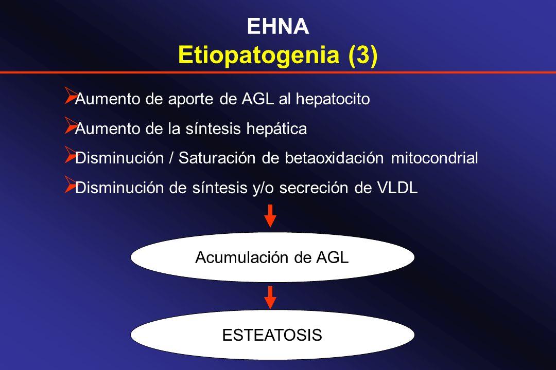 EHNA Etiopatogenia (3) Aumento de aporte de AGL al hepatocito Aumento de la síntesis hepática Disminución / Saturación de betaoxidación mitocondrial D