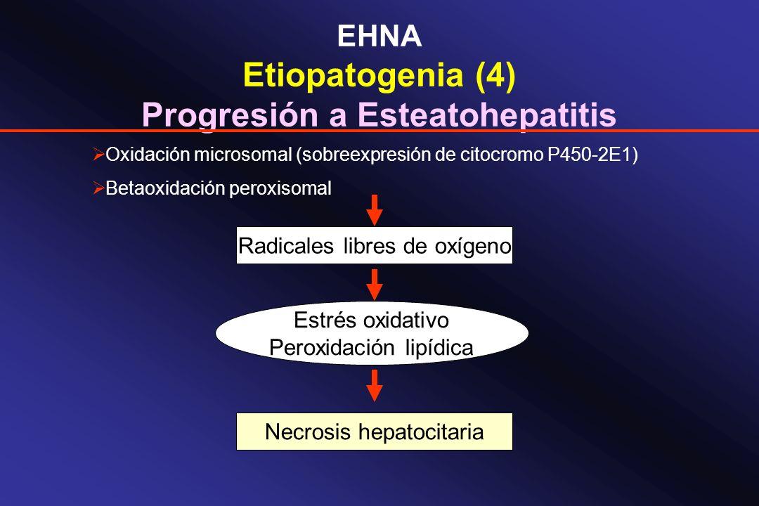 EHNA Etiopatogenia (4) Progresión a Esteatohepatitis Oxidación microsomal (sobreexpresión de citocromo P450-2E1) Betaoxidación peroxisomal Radicales l