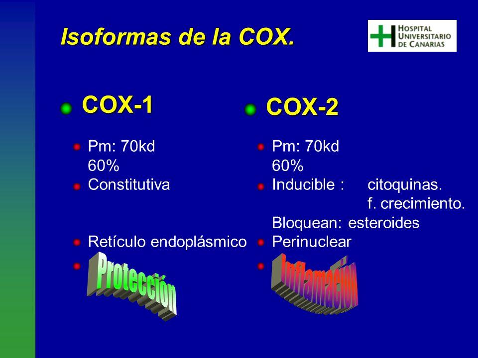 COX-2 Pm: 70kd 60% Constitutiva Retículo endoplásmico Pm: 70kd 60% Inducible : citoquinas. f. crecimiento. Bloquean: esteroides Perinuclear COX-1 Is