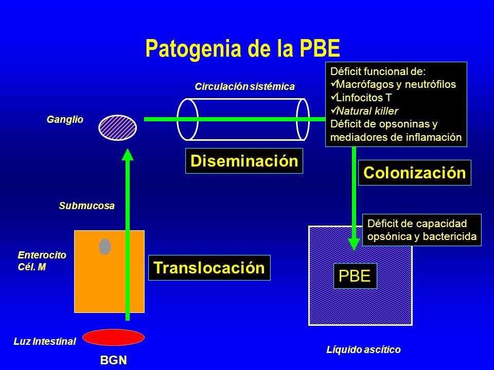 Translocación bacteriana Adhesión Endocitosis Fagocitosis y transporte Ganglio Enterocito Cél.