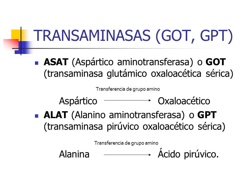 TRANSAMINASAS (GOT, GPT) ASAT (Aspártico aminotransferasa) o GOT (transaminasa glutámico oxaloacética sérica) Transferencia de grupo amino AspárticoOx