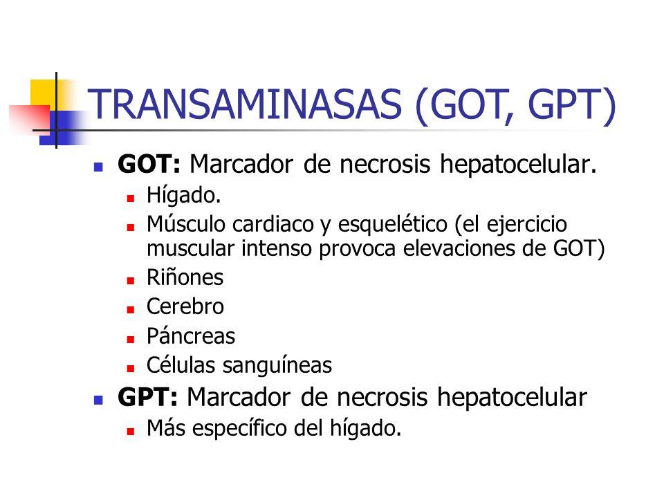GOT: Marcador de necrosis hepatocelular. Hígado. Músculo cardiaco y esquelético (el ejercicio muscular intenso provoca elevaciones de GOT) Riñones Cer