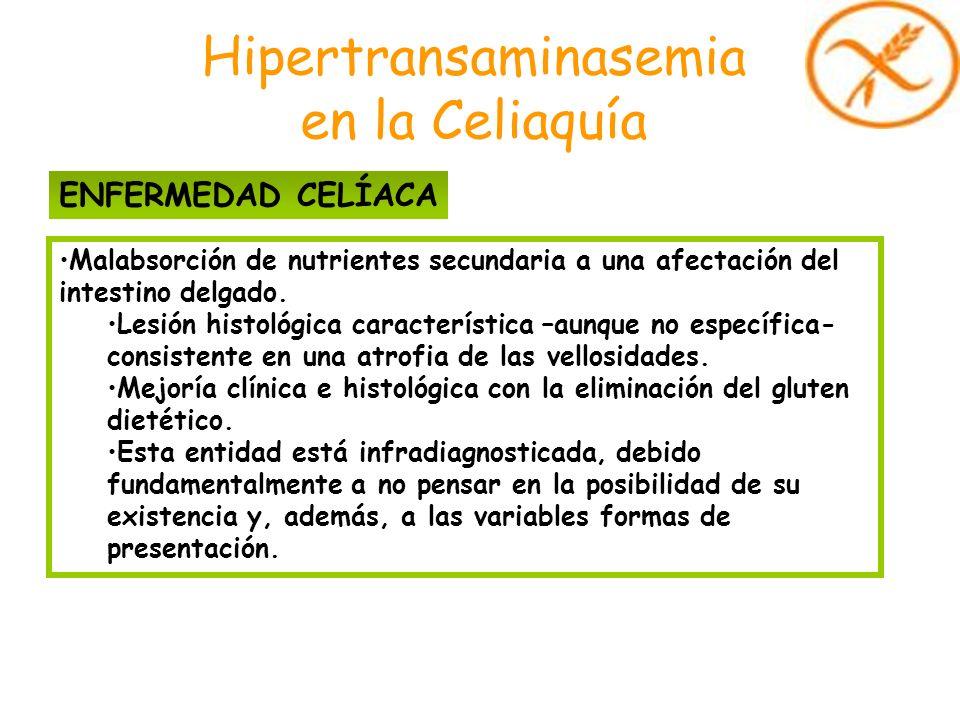 Hipertransaminasemia en la Celiaquía Malabsorción de nutrientes secundaria a una afectación del intestino delgado. Lesión histológica característica –