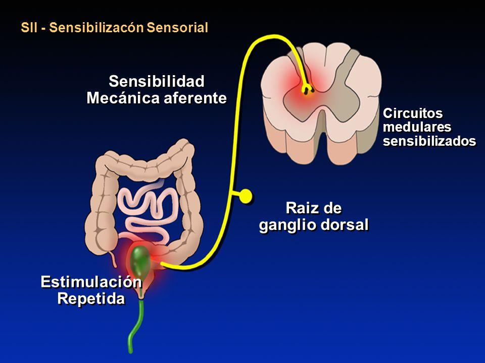 SII - Sensibilizacón Sensorial Raiz de ganglio dorsal Sensibilidad Mecánica aferente Circuitos medulares sensibilizados Estimulación Repetida