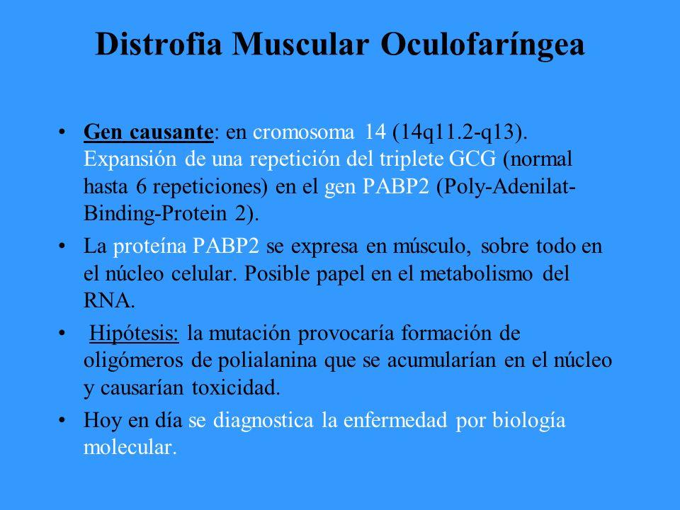 Distrofia Muscular Oculofaríngea Gen causante: en cromosoma 14 (14q11.2-q13).