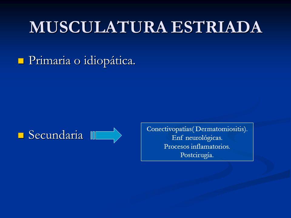 MUSCULATURA ESTRIADA Primaria o idiopática. Primaria o idiopática. Secundaria Secundaria Conectivopatías( Dermatomiositis). Enf neurológicas. Procesos