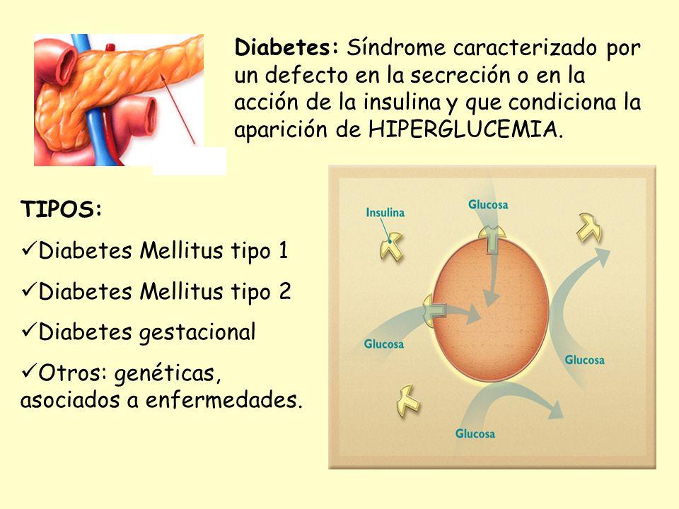 Diabetes: Síndrome caracterizado por un defecto en la secreción o en la acción de la insulina y que condiciona la aparición de HIPERGLUCEMIA. TIPOS: D