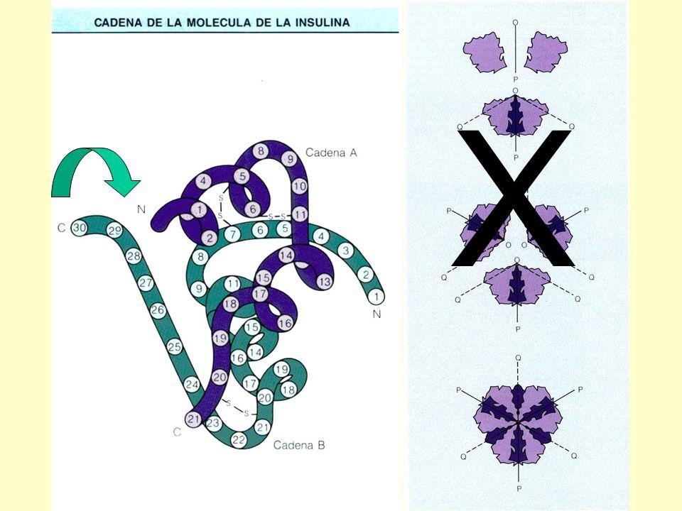 Biodisponibilidad de la insulina lispro X