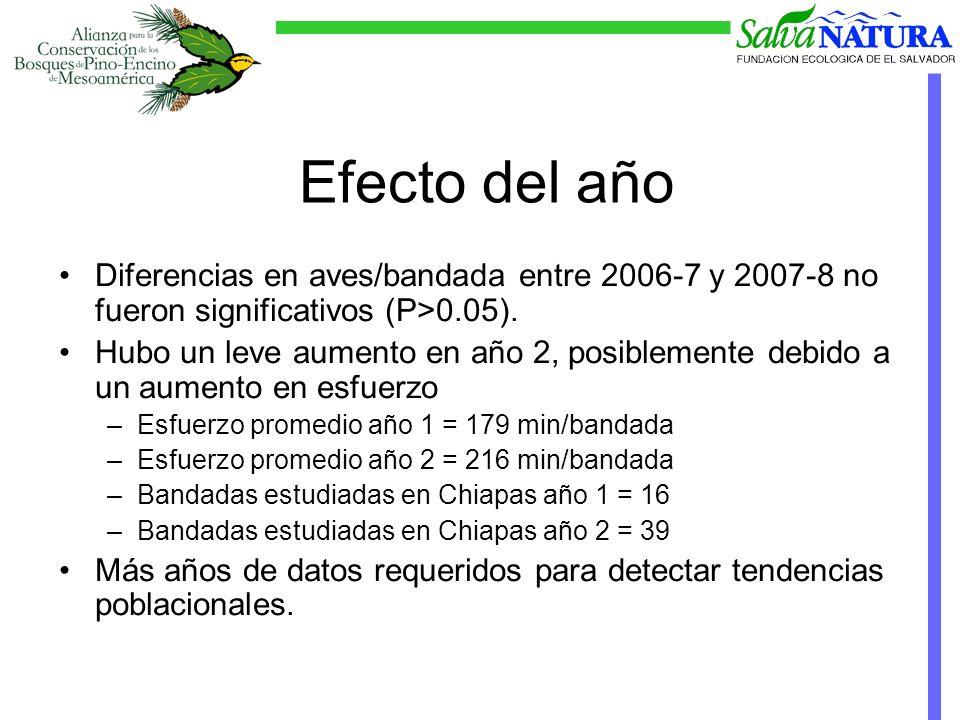 Diferencias en aves/bandada entre 2006-7 y 2007-8 no fueron significativos (P>0.05).