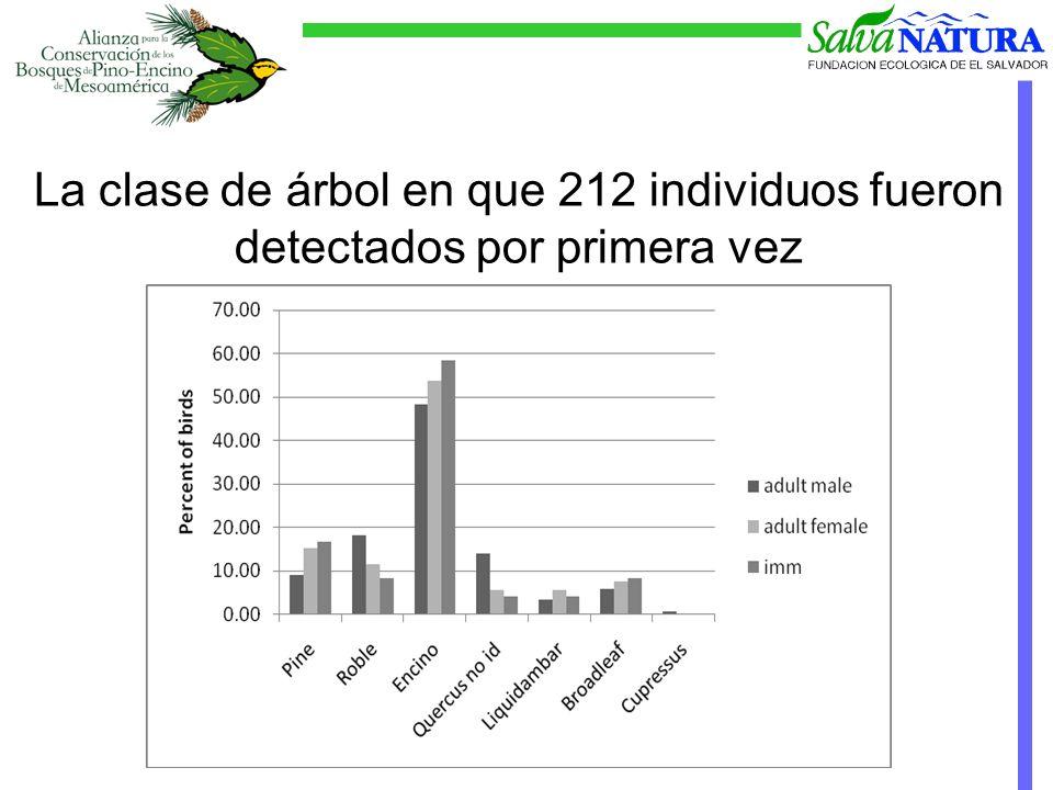 La clase de árbol en que 212 individuos fueron detectados por primera vez