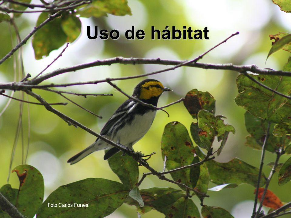 Uso de hábitat Foto Carlos Funes.