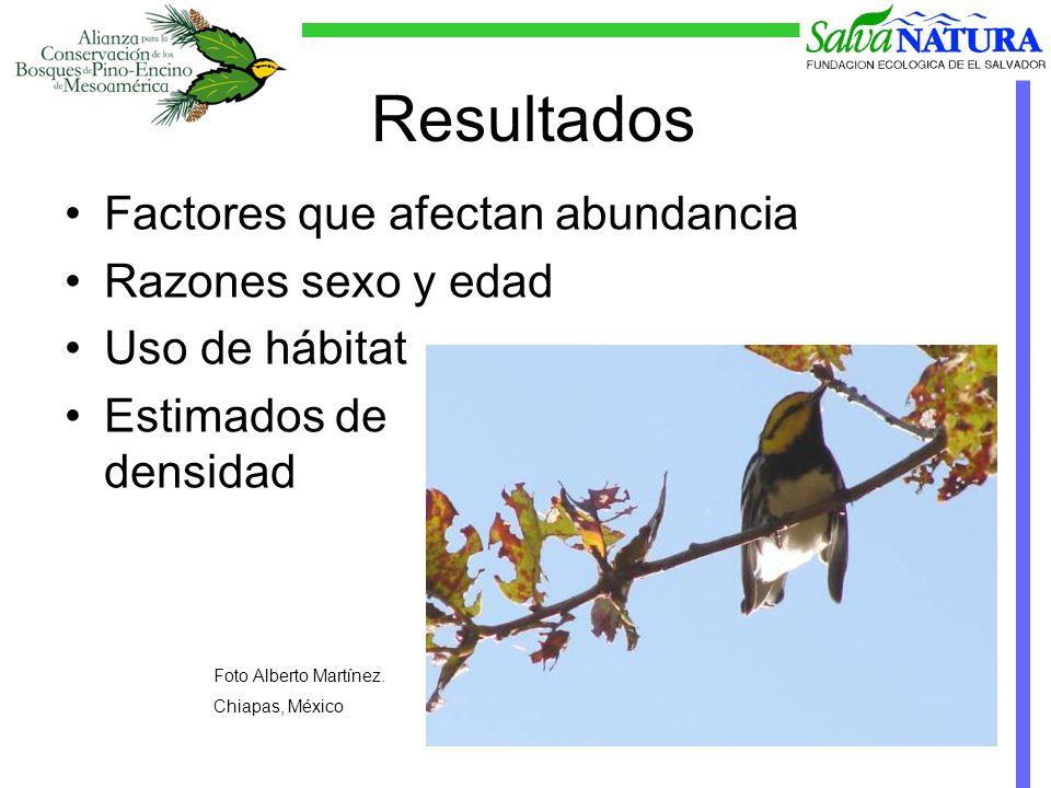 Resultados Factores que afectan abundancia Razones sexo y edad Uso de hábitat Estimados de densidad Foto Alberto Martínez.