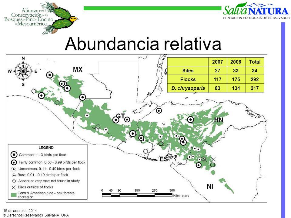 Abundancia relativa 15 de enero de 2014 © Derechos Reservados SalvaNATURA 20072008Total Sites273334 Flocks117175292 D.