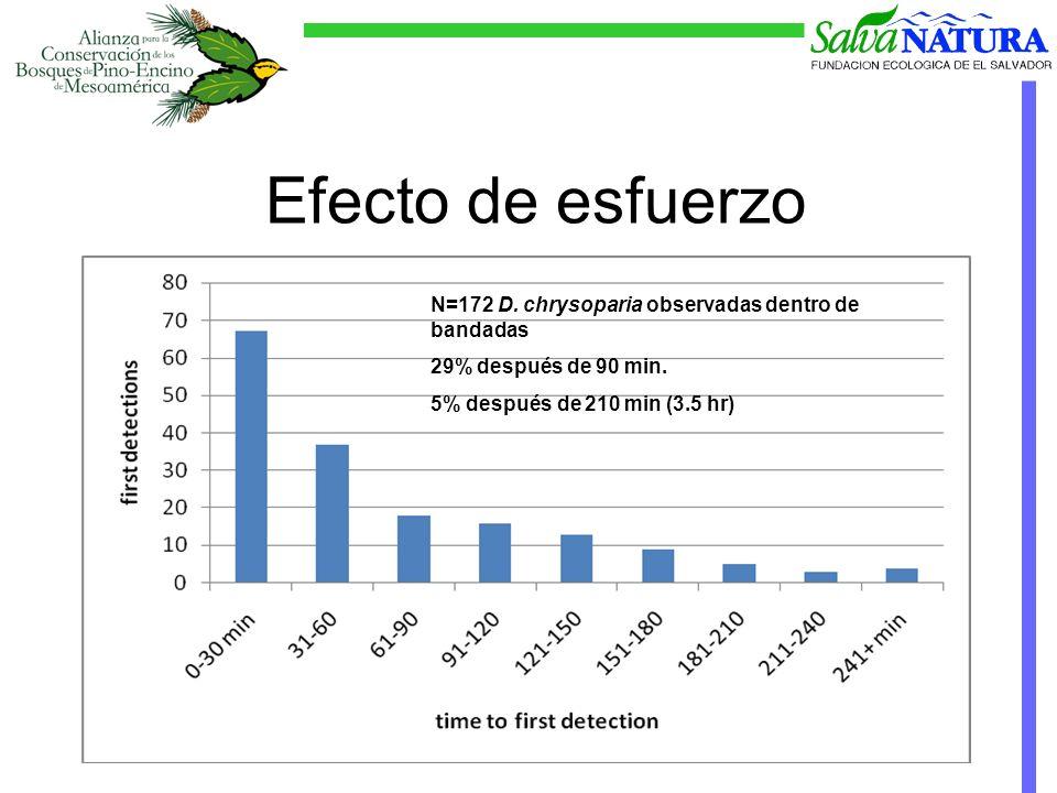 Efecto de esfuerzo N=172 D. chrysoparia observadas dentro de bandadas 29% después de 90 min.