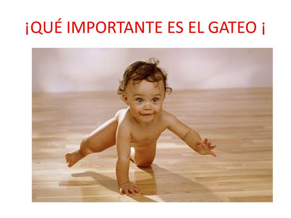 ¡QUÉ IMPORTANTE ES EL GATEO ¡