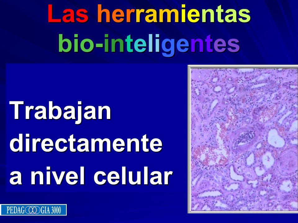 Info-energía Info-energía Cada punto dentro de la memoria celular contiene información completa del todo holístico. Si reducimos una célula hasta el n
