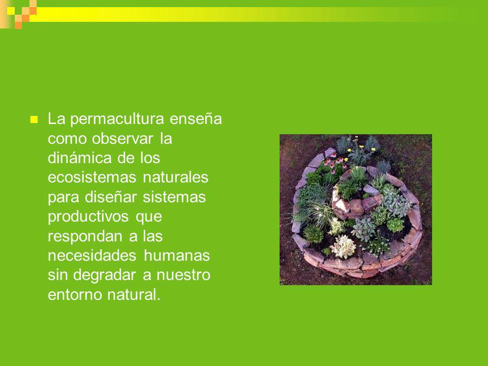 La permacultura enseña como observar la dinámica de los ecosistemas naturales para diseñar sistemas productivos que respondan a las necesidades humana