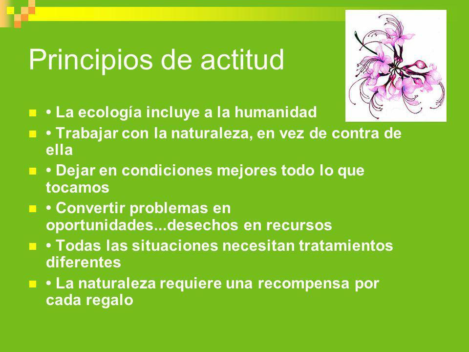 Principios de actitud La ecología incluye a la humanidad Trabajar con la naturaleza, en vez de contra de ella Dejar en condiciones mejores todo lo que