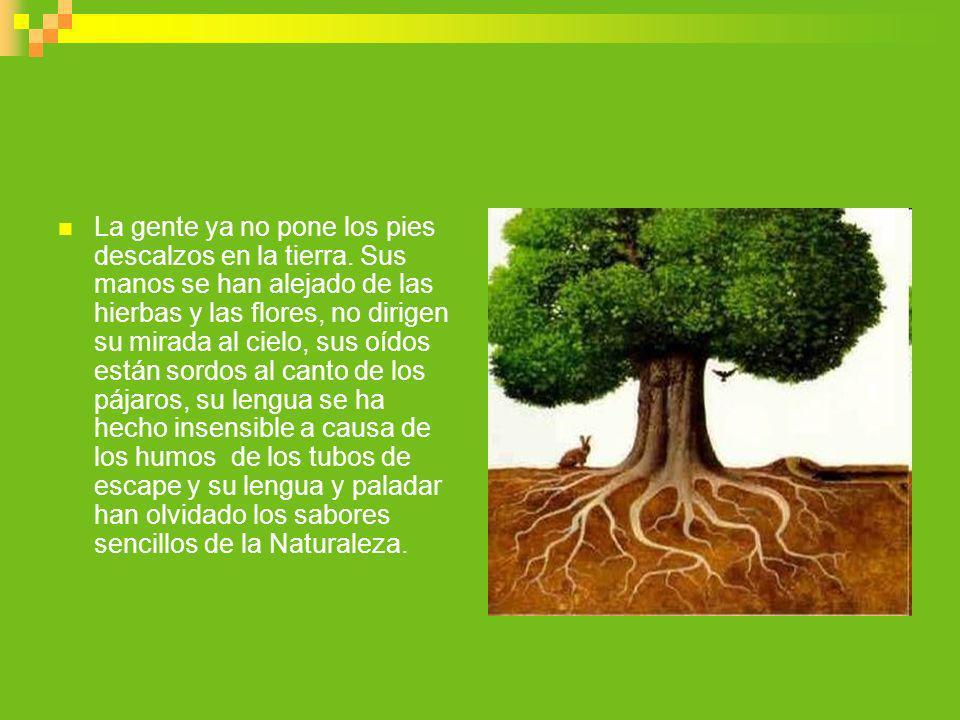 Usa y valora los servicios y recursos renovables dejemos que la naturaleza siga su curso